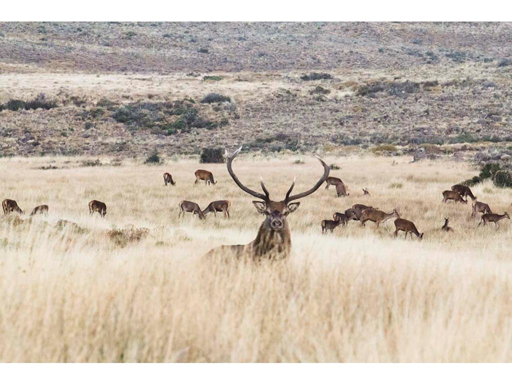 "Laura Ferro - ""Red Deer"" - Lambda Print on Kodak Endura Metallic paper - 4/9 + 1 artist proof - 2015"