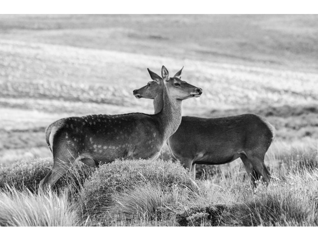 "Laura Ferro - ""Siamese Twins"" - Lambda Print on Kodak Endura Metallic paper - 5/9 + 1 artist proof - 2015"